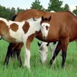 Jak założyć stadninę koni?