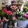 Projekt wnętrza kwiaciarni